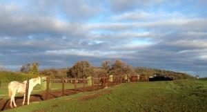 pasture.2014.02.22