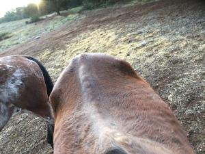 Delaina's hips, Nov. 15