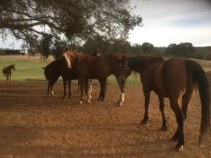 2015-10-horses