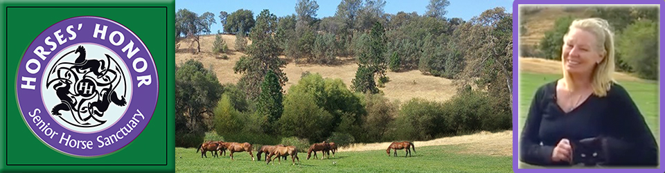 Horses' Honor Senior Horse Sanctuary